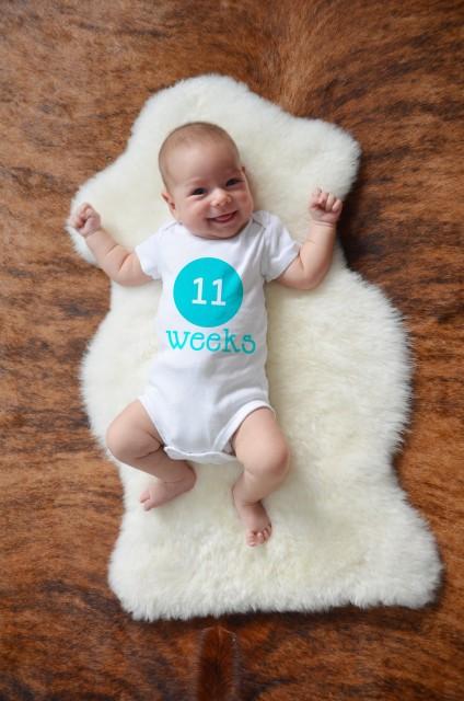 11 weeks copy